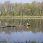 vissen Hijken